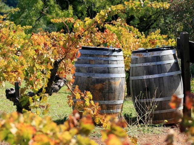 Vinícola Maté Winery em Montalcino