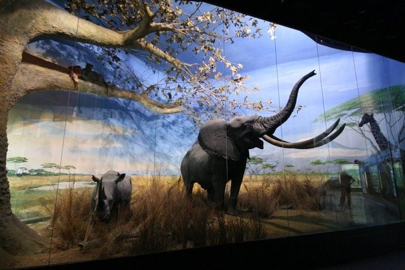 Painel no interior do Museu Cívico de História Natural