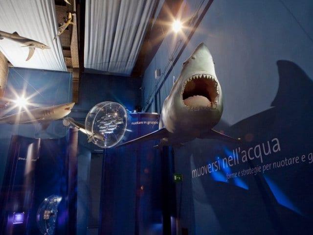 Museu de História Natural de Veneza