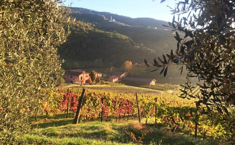 Vinícola Greo Winery perto de Lucca