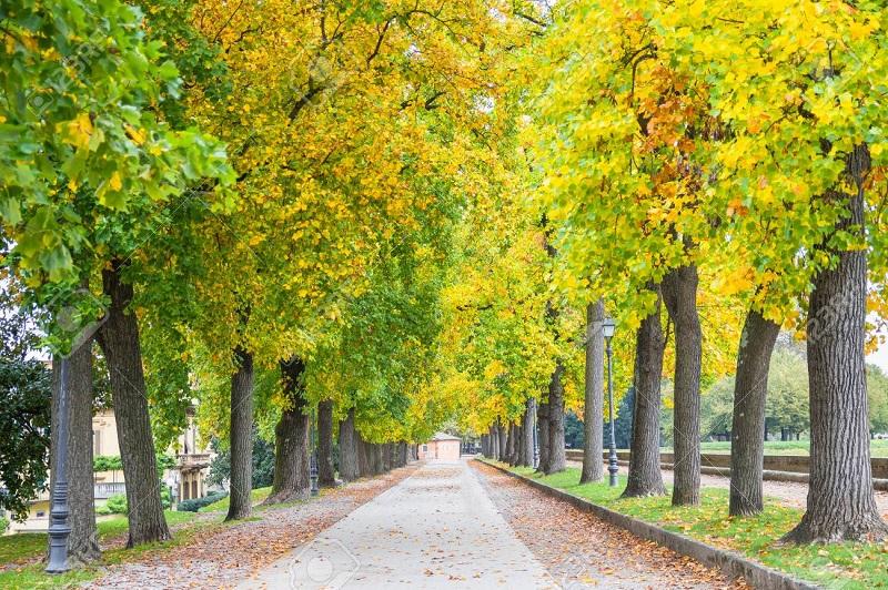 Outono em Lucca