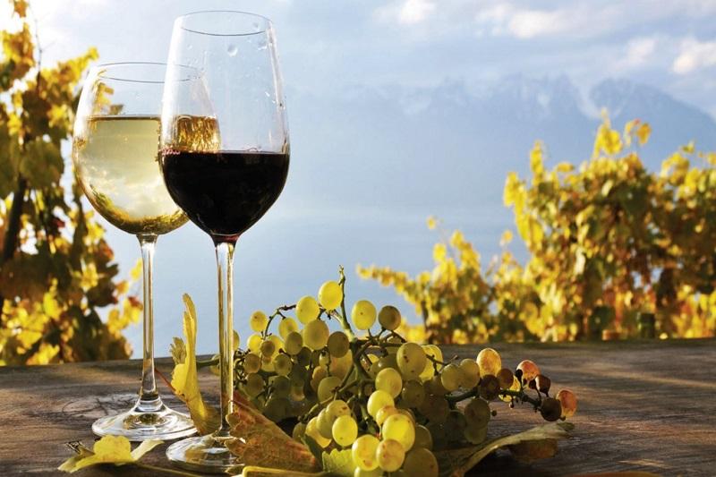 Taças de vinho com cachus de uva ao lado